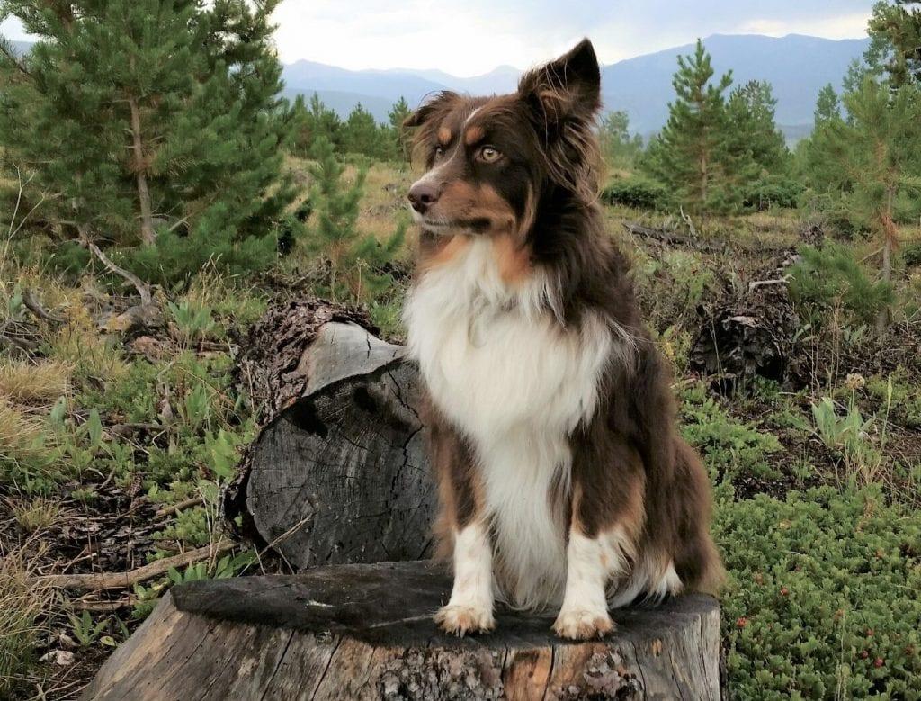 Laceys beloved dog Fitz